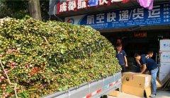 成都至深圳花卉运输